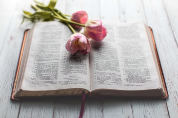 pink tulips on an open Bible